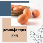❕Дезинфекция яиц важна не только на птицефабриках, но и в том случае, когда вы покупаете деревенские яйца. Мы предлагаем вам Аквадез НУК 15- дезинфицирующее средство на основе перекиси водорода и надуксусной кислоты. 💯Эффективный дезинфектант в отношении грамположительных и грамотрицательных бактерий, в том числе сальмонеллеза и туберкулеза. ✔Очень низкий расход- 1 мл средства на 1 литр воды. #sarbio #птицефабрика